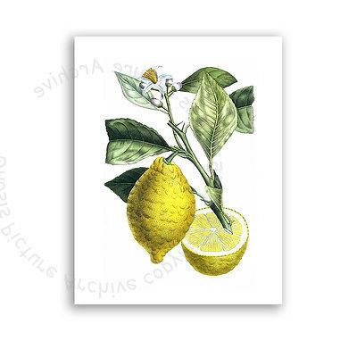Farmhouse Kitchen Lemons Art Set 6