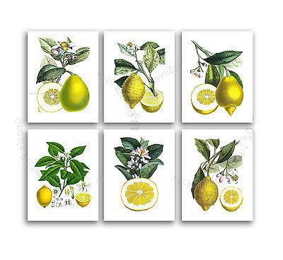 Farmhouse Art Print 6 Unframed Botanical