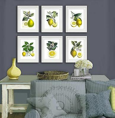 farmhouse kitchen decor lemons art print set