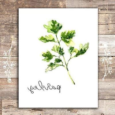 Kitchen Herbs Art Prints - Botanical Set of 6 Unframed