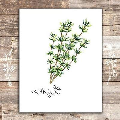Kitchen - Botanical Prints - Set 6 - Unframed 8x10s