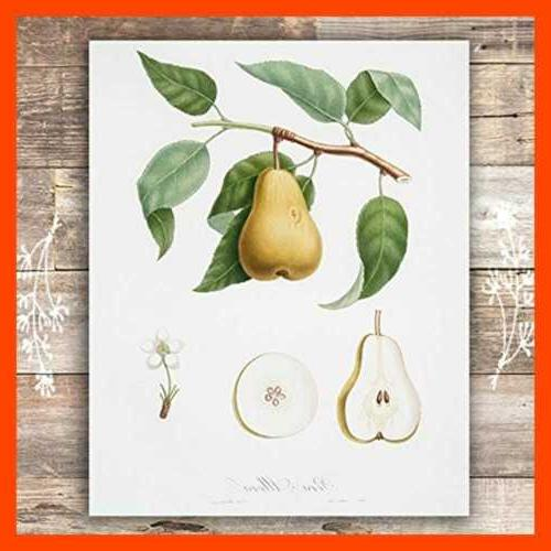 Vintage Fruit Art Kitchen Botanical Set 6 8X10s
