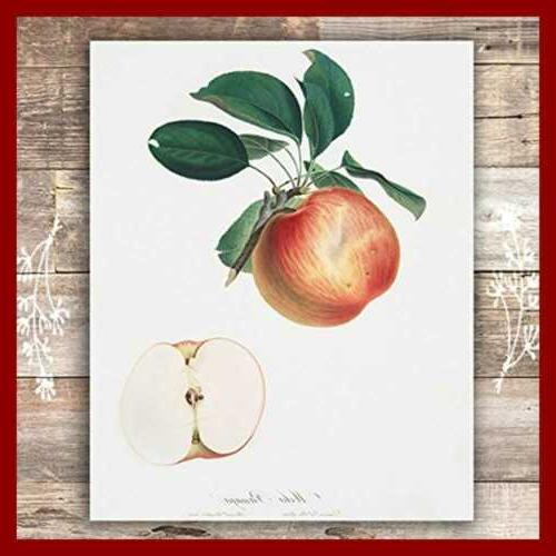 Vintage Fruit Kitchen Of 6 Unframed 8X10s