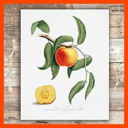 vintage fruit art prints kitchen botanical set